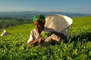 Woman Fair Trade